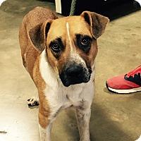 Adopt A Pet :: Baxter - Hatifeld, PA