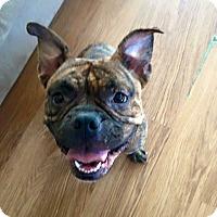 Adopt A Pet :: Butterbean - Newtown, CT