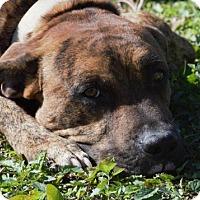 Adopt A Pet :: Alex - Choudrant, LA