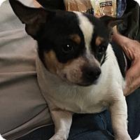 Adopt A Pet :: Clinton - Santa Ana, CA