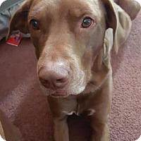 Adopt A Pet :: Kane - Warsaw, IN