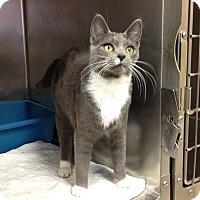 Adopt A Pet :: Petco #2 - Triadelphia, WV