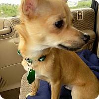 Adopt A Pet :: Tod - Salem, OR