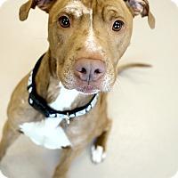 Adopt A Pet :: Simba - Appleton, WI