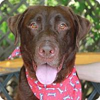 Adopt A Pet :: Moose - Garfield Heights, OH