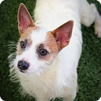 Adopt A Pet :: Alex - Ft. Lauderdale, FL