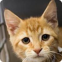 Adopt A Pet :: Chewbacca - Birmingham, AL