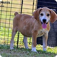 Adopt A Pet :: MacCallen - Dixon, KY
