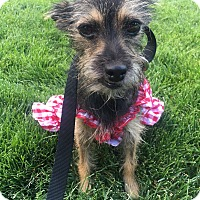 Adopt A Pet :: Sami formerly Articuno - Las Vegas, NV
