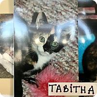 Adopt A Pet :: Tabitha - Island Park, NY