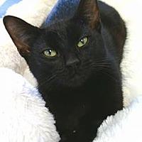 Adopt A Pet :: Clara - Austintown, OH