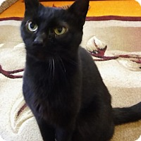 Adopt A Pet :: Sam - Witter, AR