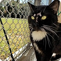 Adopt A Pet :: Oakley - Umatilla, FL
