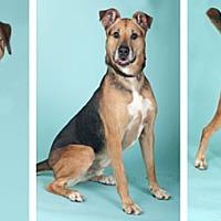 Adopt A Pet :: Wilson - Chicago, IL