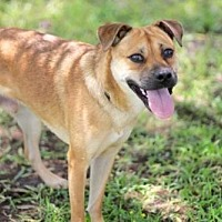 Adopt A Pet :: SKIPPY - Sussex, NJ