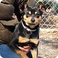 Adopt A Pet :: Squiggy - Athens, GA