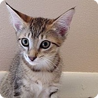 Adopt A Pet :: TigerMax - Vero Beach, FL