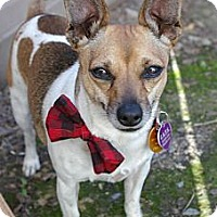 Adopt A Pet :: Bala - Sacramento, CA