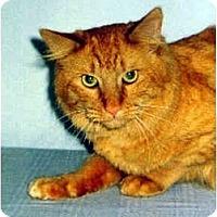 Adopt A Pet :: Jimbo - Medway, MA