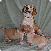 Adopt A Pet :: Mackenzie - Oviedo, FL