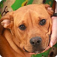 Adopt A Pet :: Blaze - san diego, CA