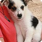 Adopt A Pet :: Faye