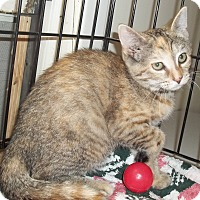 Adopt A Pet :: Little Ruth - Acme, PA