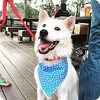 Adopt A Pet :: Tug - San Antonio, TX