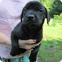 Adopt A Pet :: Romeo - Williston Park, NY
