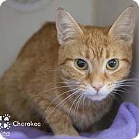 Adopt A Pet :: Cherokee - Merrifield, VA
