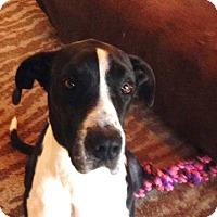 Adopt A Pet :: Blaze - Memphis, TN