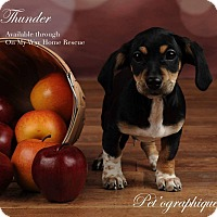 Adopt A Pet :: Thunder - Henderson, NV