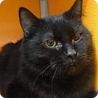Adopt A Pet :: Silas - Elyria, OH