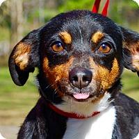 Adopt A Pet :: Lucy - Daleville, AL