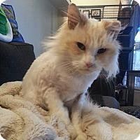 Adopt A Pet :: Thor - Edmonton, AB