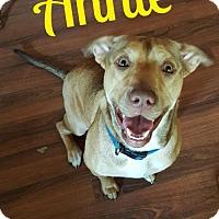 Adopt A Pet :: Annie - Cantonment, FL