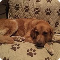 Adopt A Pet :: Briley - Los Angeles, CA