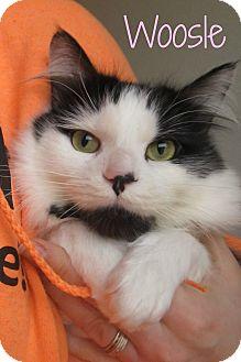 Domestic Mediumhair Cat for adoption in Menomonie, Wisconsin - Woosle