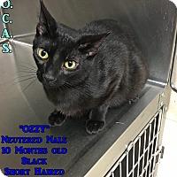 Adopt A Pet :: T-3 Ozzy - Triadelphia, WV