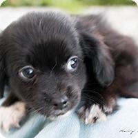 Adopt A Pet :: Dorothy - Modesto, CA