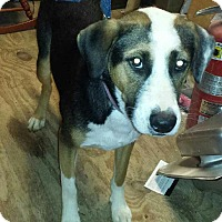 Adopt A Pet :: Rascal 1 in CT - Manchester, CT
