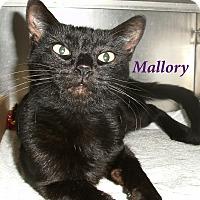 Adopt A Pet :: Mallory - El Cajon, CA