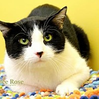 Adopt A Pet :: Leo - Sterling Heights, MI