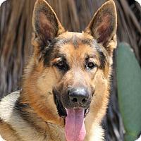 Adopt A Pet :: Telly - San Diego, CA