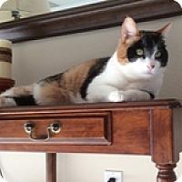Adopt A Pet :: Autumn - Novato, CA