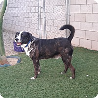 Adopt A Pet :: Vincent - Scottsdale, AZ