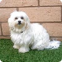 Adopt A Pet :: Susie Q - Alta Loma, CA