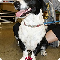 Adopt A Pet :: Allie - Cheney, KS