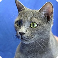 Adopt A Pet :: Grizelda - Winston-Salem, NC