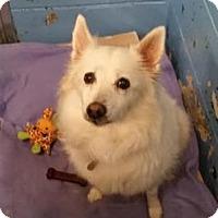 Adopt A Pet :: Tiny - Lowell, MA
